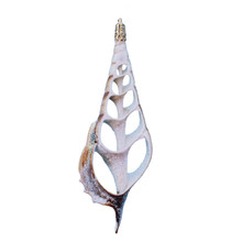 Sliced Tibia Glitter Seashell Ornament