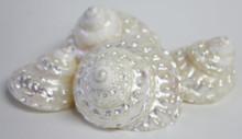 Pearl Wavy Top Seashell