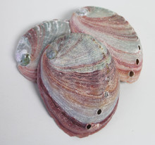 Red Abalone Seashells