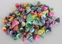 Colored Among Pong Seashells - 1 Pound