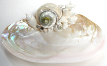 Pearl Turbo Oyster Soap Dish