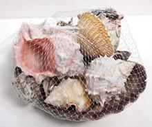 Lion Paw Seashell Net Bag - 1kg