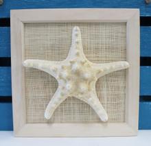 Framed White Bumpy Starfish
