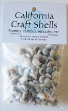 Pearl Umbonium Button Top Seashells