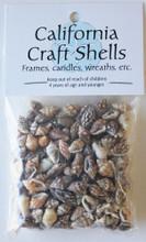 Natural Nassa Shell Craft Bag