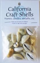 Money Cowrie Shell Craft Bag