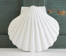 Giant Irish Scallop Shell