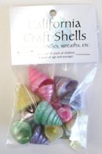 Colored Pearl Trochus