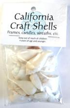White Strombus Craft Shells