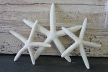 "2-4"" White Finger Starfish - 100 Pieces"