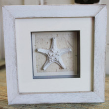 White Starfish Shadow Box