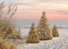 Christmas Trees & Beach Grass