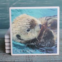 California Sea Otters Coaster