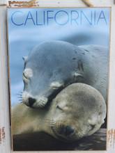 Cuddling Sea Lions