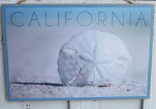 Sand Dollar California Sign