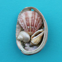 Abalone Collage Magnet