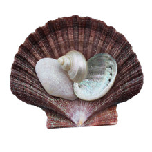Brown Pectin Shell Collage Magnet