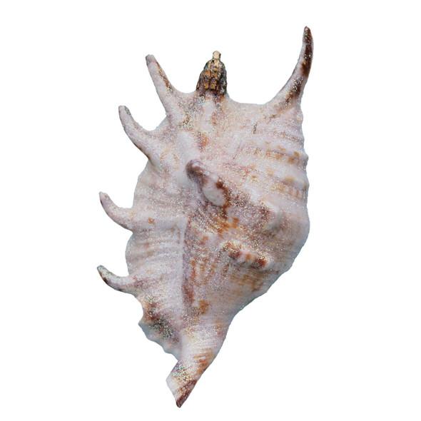 Small Glitter Lambis Lambis Seashell Ornament