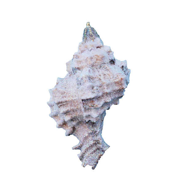 Small Apple Murex Seashell Glitter Christmas Ornament