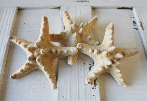 Natural Thorny Starfish