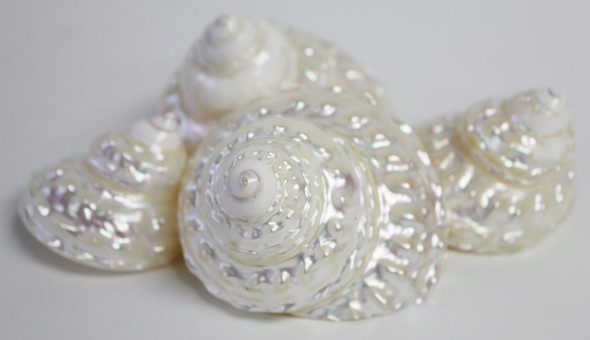 Pearl Wavy Top Seashell