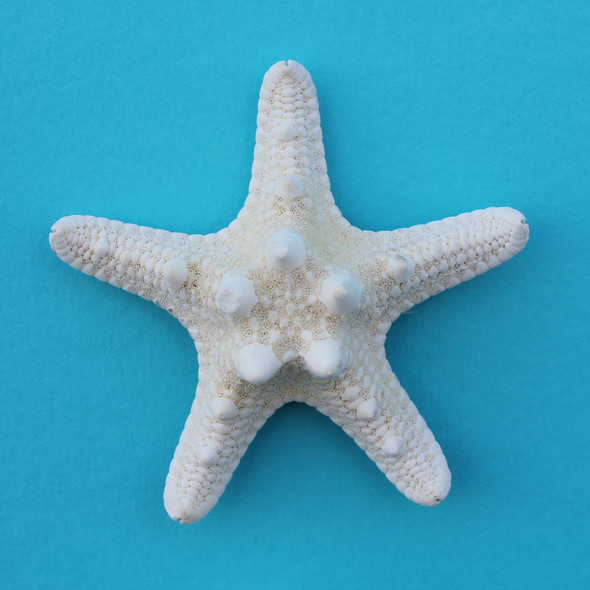 White Bumpy Starfish Magnet