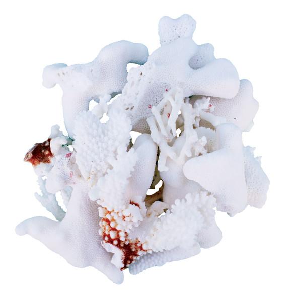 Coral Pieces