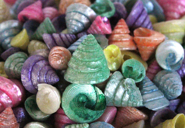 Colored Among Pong Seashells - 1 Pound