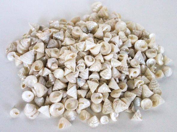 Pearlized Among Pong Seashells - 1 Pound