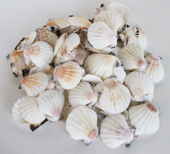 Colorful Pectin Craft Seashells - 1 Pound