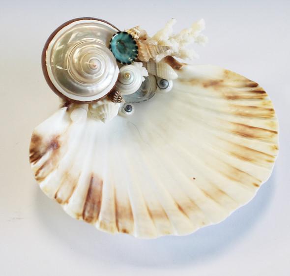 Banded Turbo Petholatus Scallop Shell soap dish