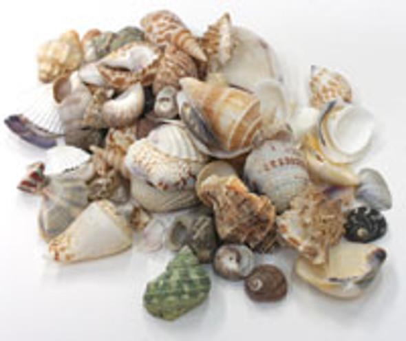 Medium Philippine Shell Mix 1kg