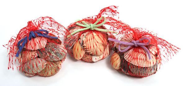 Mini Red Net Bags of Seashells - 1 Dozen