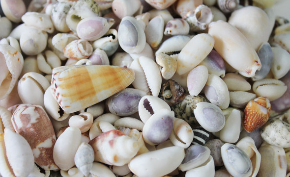 Close Up of Beach Wash Mix