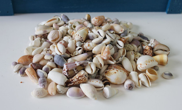 Seashell Mix from the seashore