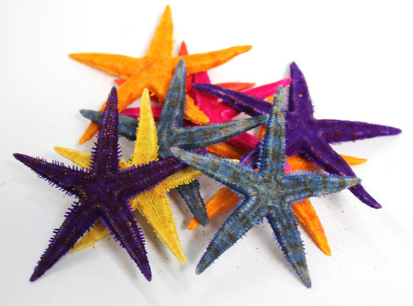 Colored PI Starfish