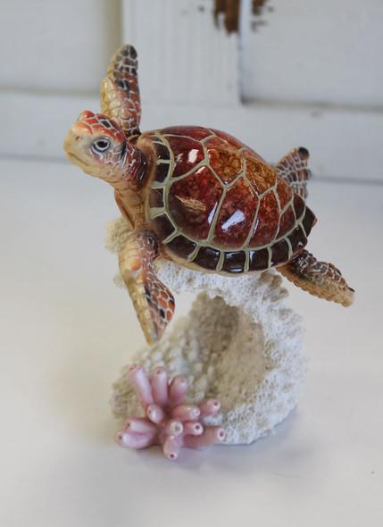 Reddish Brown Turtle on Coral
