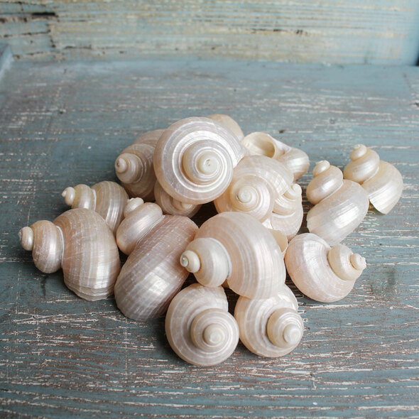 Pearl Turbo Shells