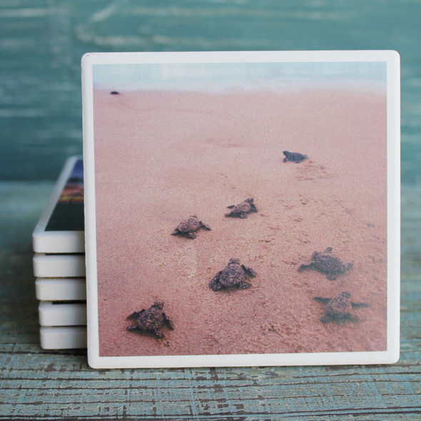 Baby Sea Turtles Coaster
