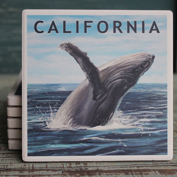California Humpback Whale Coaster