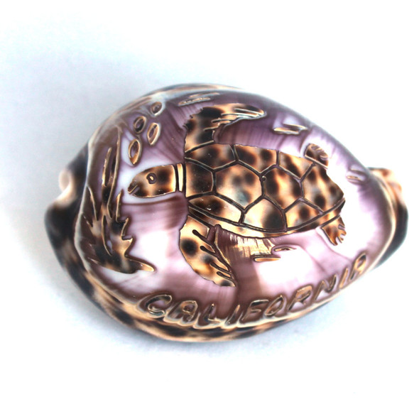California Sea Turtle Carved Cowrie Shell
