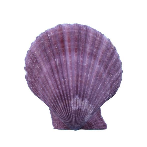 Purple Pectin Magnet