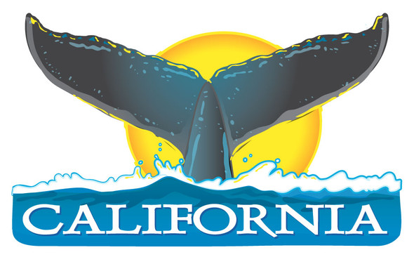 California Whale Tail Sticker