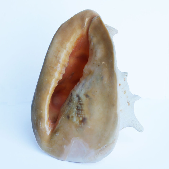 Helmet Shell