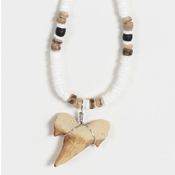Clam Shell & Shark Tooth Necklace