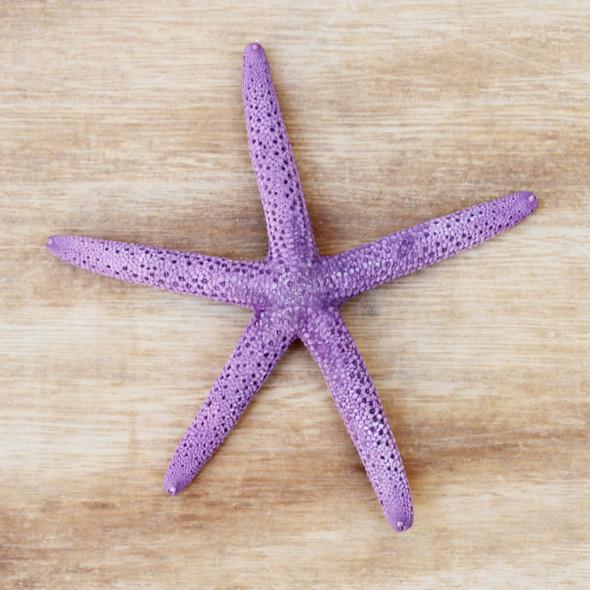 Purple Dyed Finger Starfish