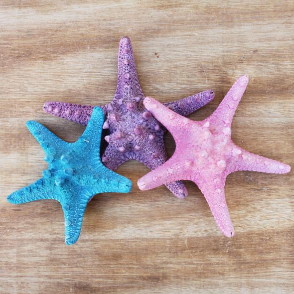 Dyed Bumpy Starfish