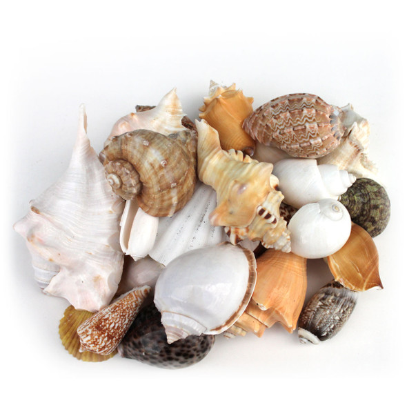 Large Shell Mix
