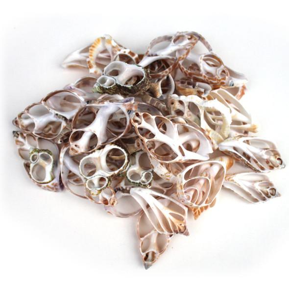 Assorted Sliced Shells