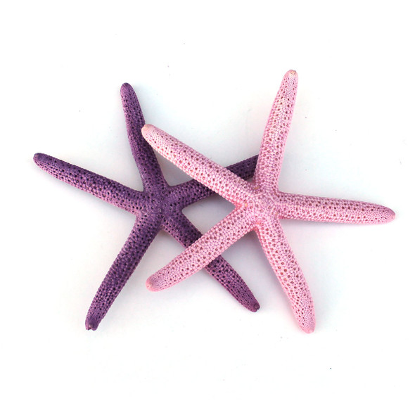 "Dyed 2-4"" Finger Starfish"